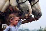 Amish Girl with Draft Horses image