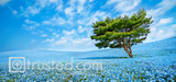 Harmony in Blue, Japan, 2014 image