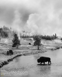 The silhouette of a bison crossing the Firehole River.