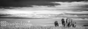 Elephants journey towards the promise of rain to come, as clouds accumulate in the sky.